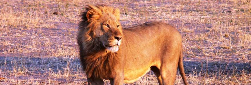 Sauvage en Afrique du Sud